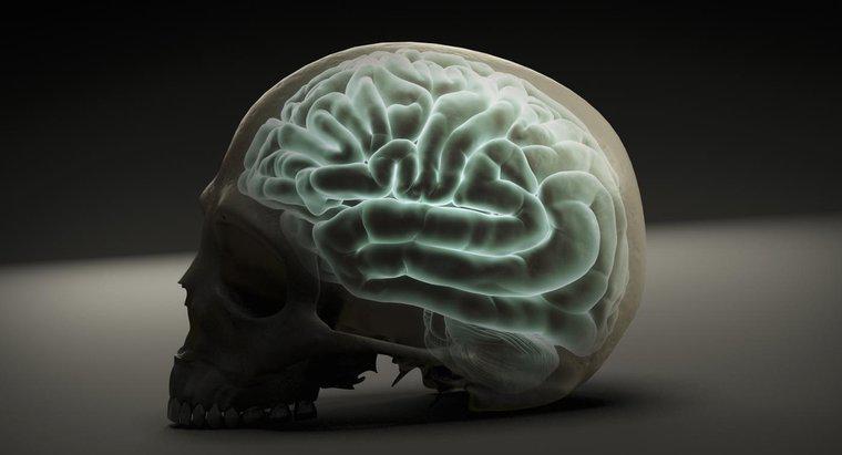 Zone ale creierului responsabile de vedere. Creier - Wikipedia
